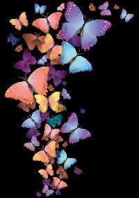 hkdp-butterflies